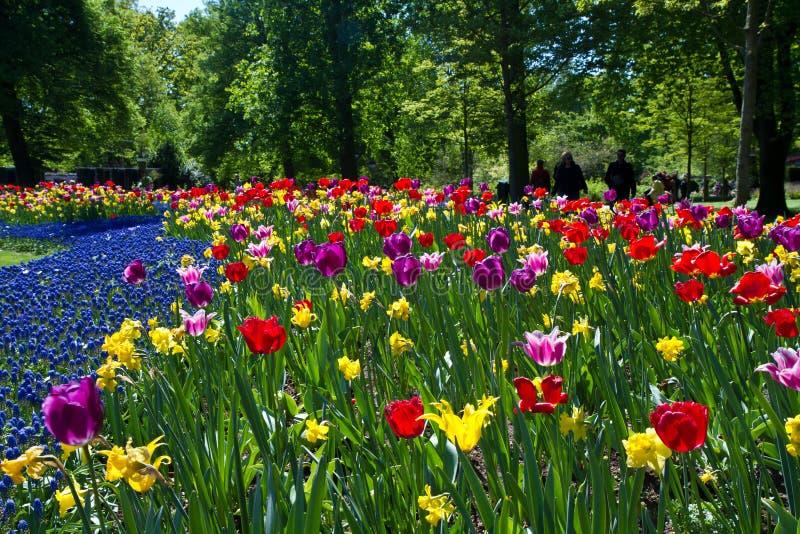 Het park van de tulp royalty-vrije stock afbeelding
