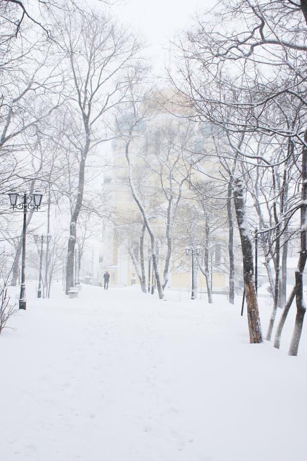 Download Het park van de winter stock afbeelding. Afbeelding bestaande uit sneeuwvlokken - 29513751