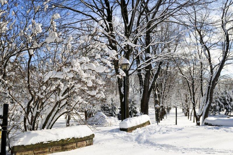 Het park van de winter royalty-vrije stock afbeeldingen
