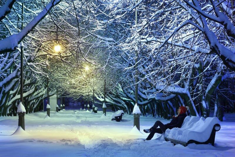 Het park van de winter bij nacht stock foto