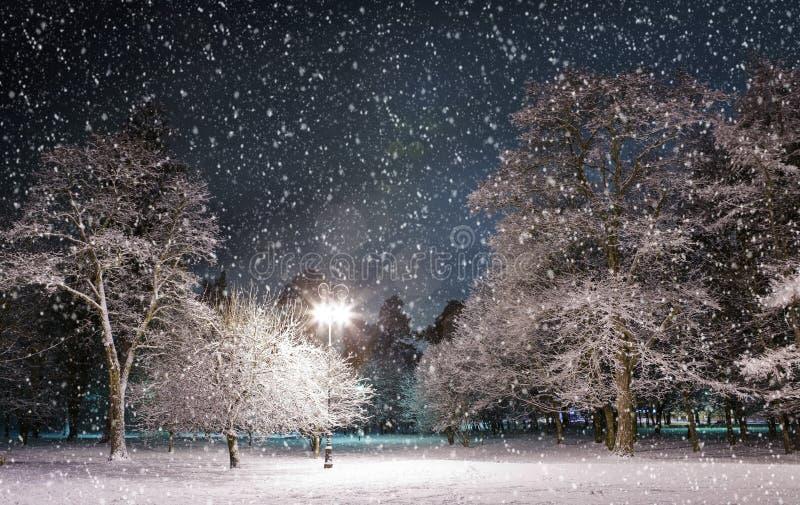 Het park van de winter bij nacht royalty-vrije stock afbeeldingen