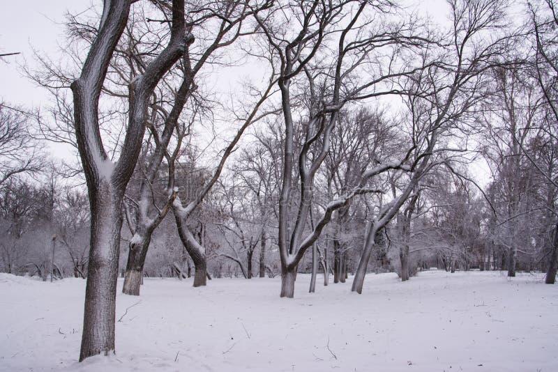 Het park van de winter ulyanovsk royalty-vrije stock afbeelding