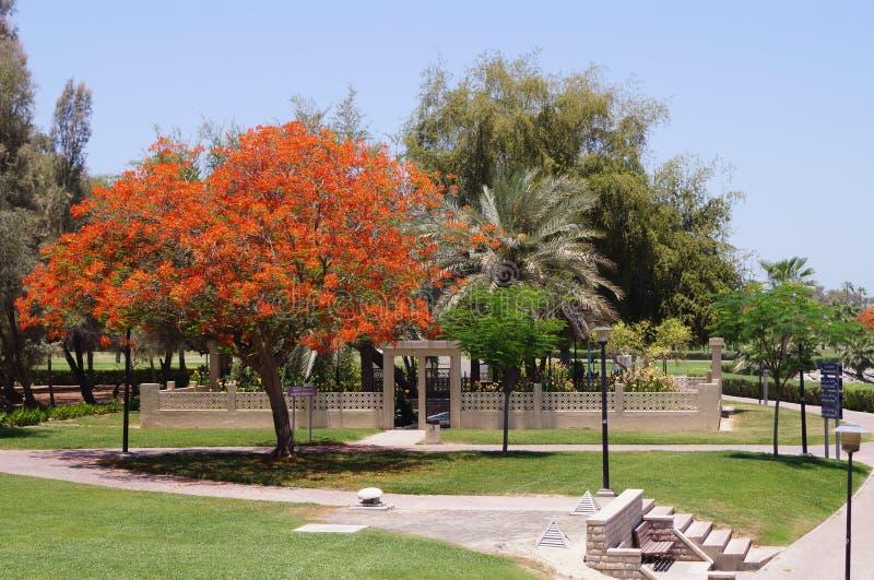 Het Park van Doubai Safa stock afbeeldingen