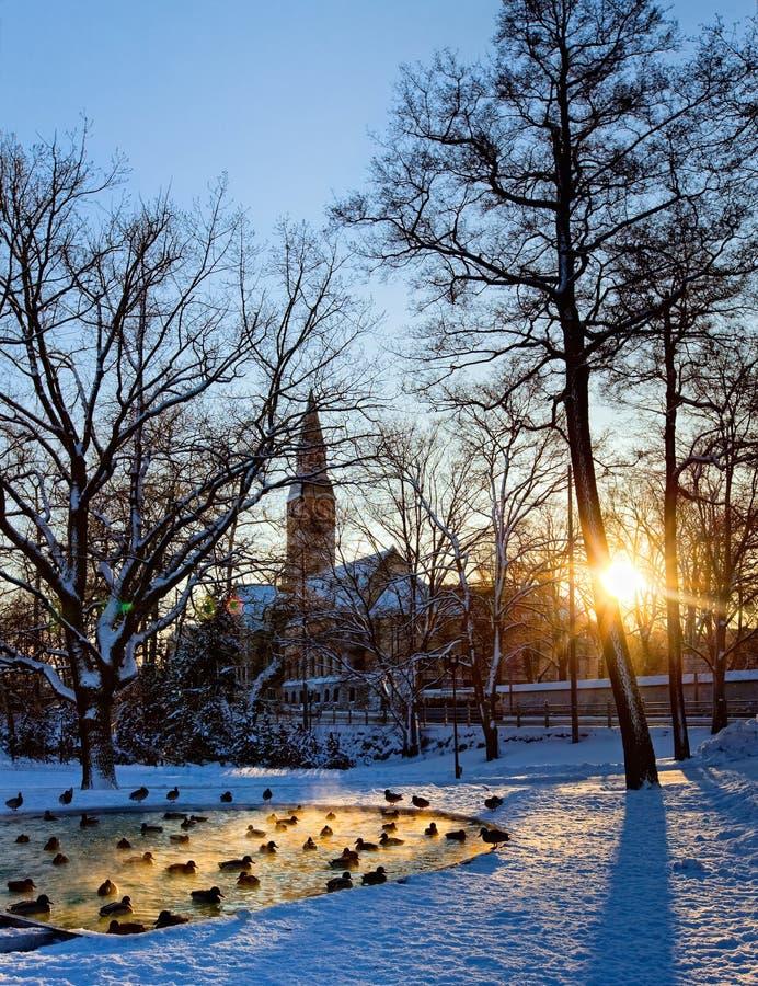 Het park van Helsinki met vijver stock afbeelding