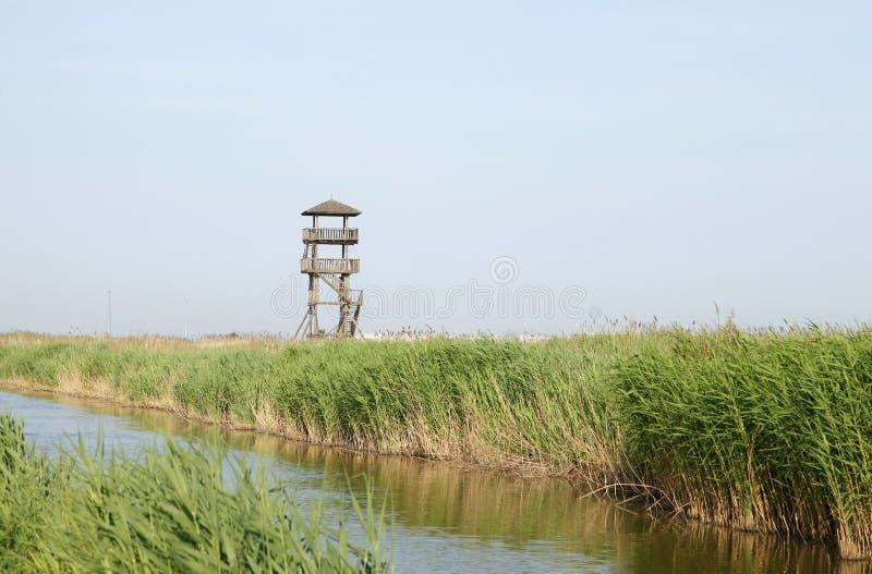 Het park van het moerasland om op toren te letten royalty-vrije stock afbeeldingen