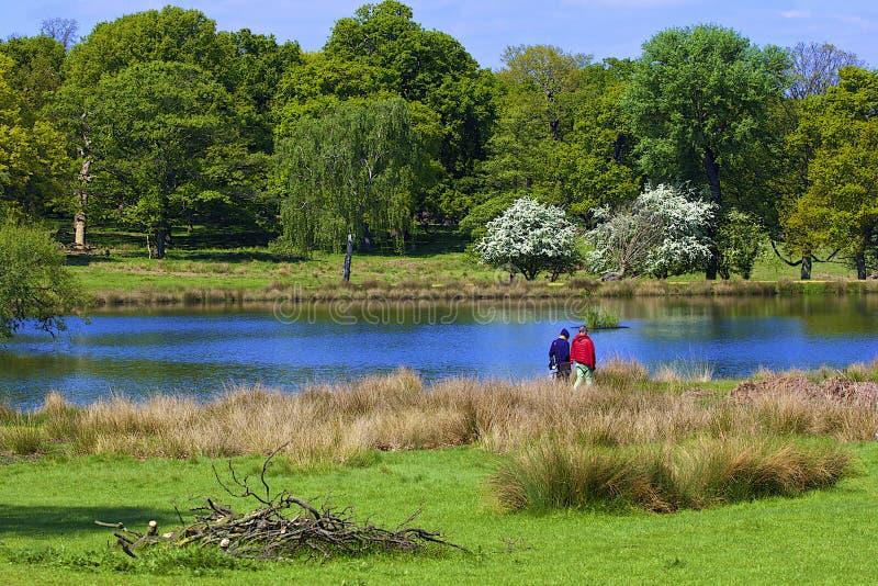 Het park van Richmond in Londen, stock foto