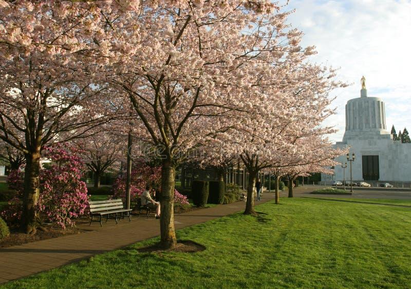 Het Park van Salem Oregon stock fotografie