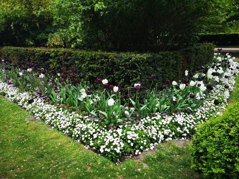 Het Parkbloemen van Londen hyde royalty-vrije stock foto's