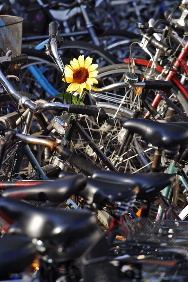 Het parkeren van de cyclus stock foto