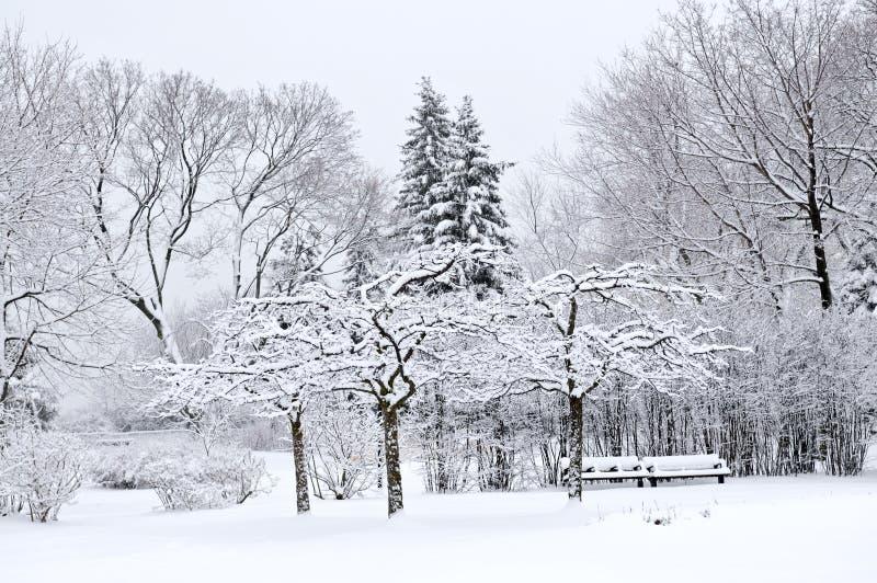 Het parklandschap van de winter royalty-vrije stock foto's