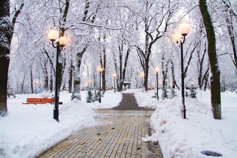Het parklandschap van de de winterstad Ijzige die bomen met sneeuw in park worden behandeld Sneeuw Dalende Achtergrond stock fotografie