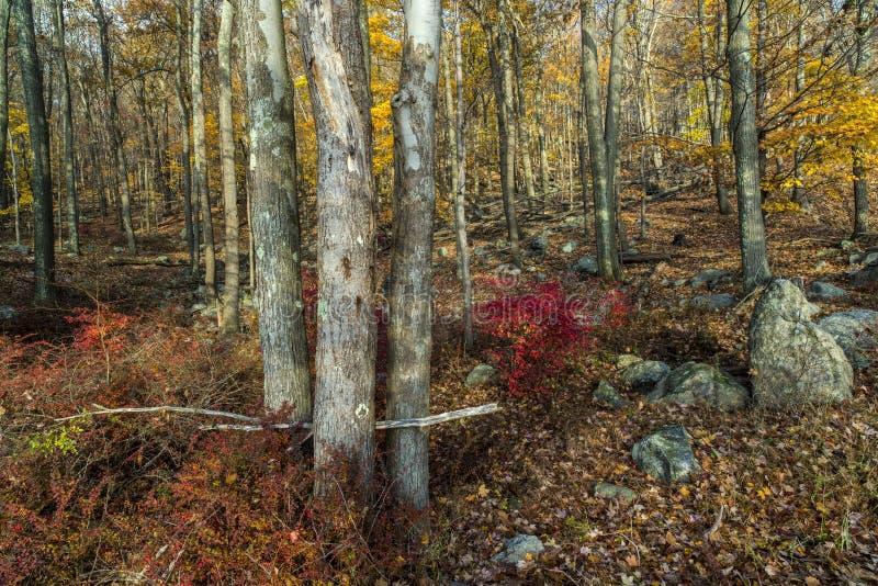 Het Parkmening van de Harrimanstaat in bos royalty-vrije stock foto's