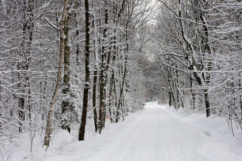 Het parkweg van de winter royalty-vrije stock foto's