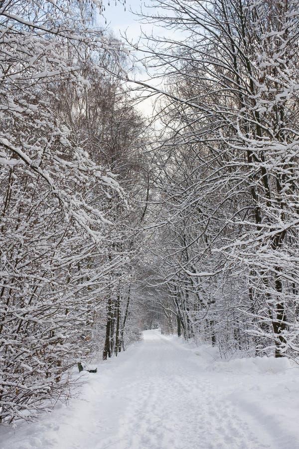 Het parkweg van de winter stock afbeeldingen