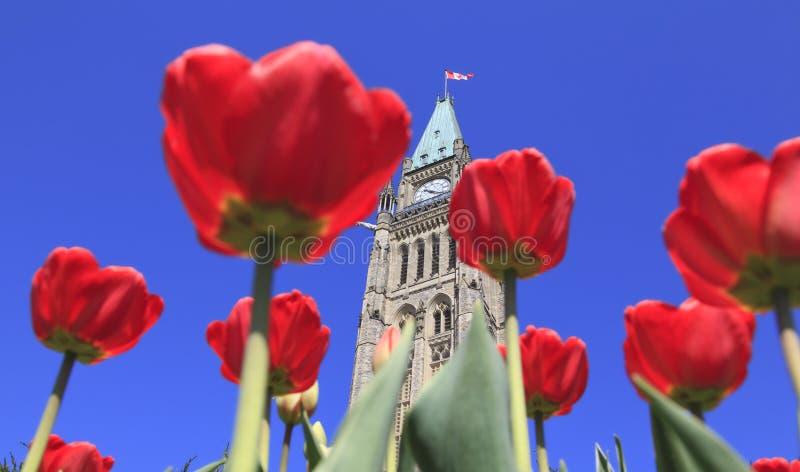 Het Parlement van Canada met rode tulpen in de voorgrond royalty-vrije stock afbeelding