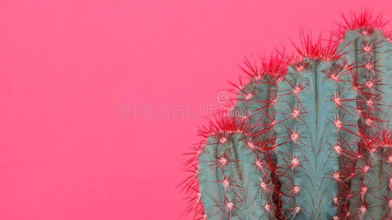 Het in pastelkleurroze kleurde minimale achtergrond met cactusinstallatie Dichte omhooggaand van de cactusinstallatie De stijl va royalty-vrije stock afbeeldingen