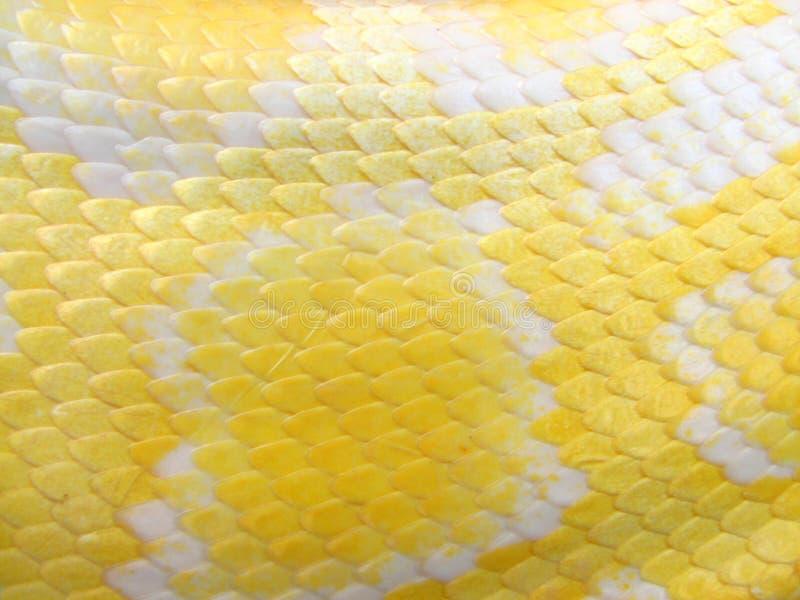 Het Patroon van de Huid van de Slang van de albino royalty-vrije stock afbeelding