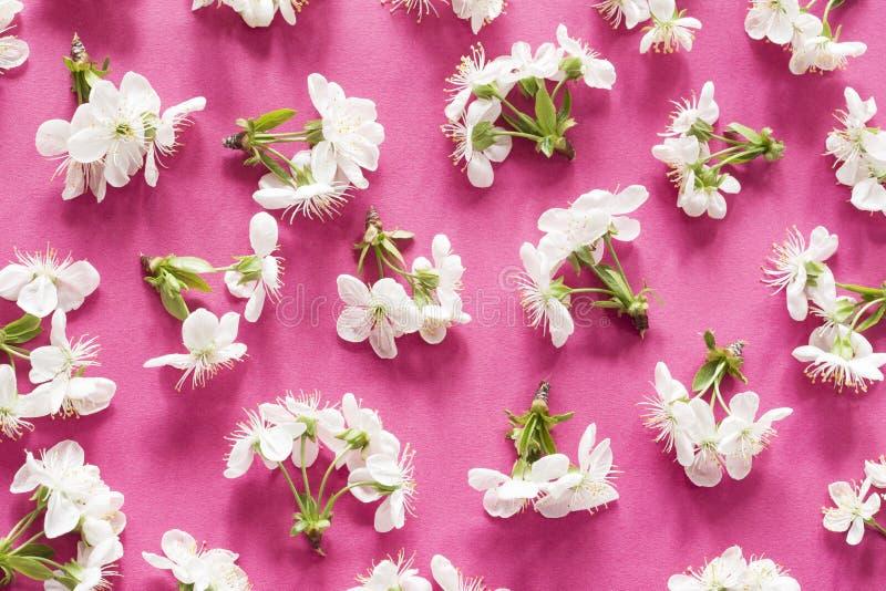 Het patroon van de de lentebloesem royalty-vrije stock afbeelding