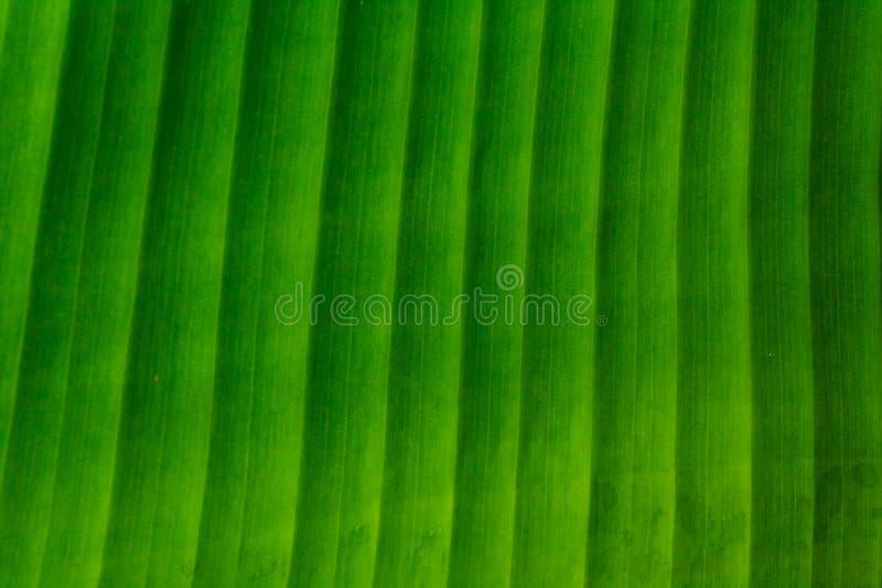 Het patroon van het banaanblad stock fotografie