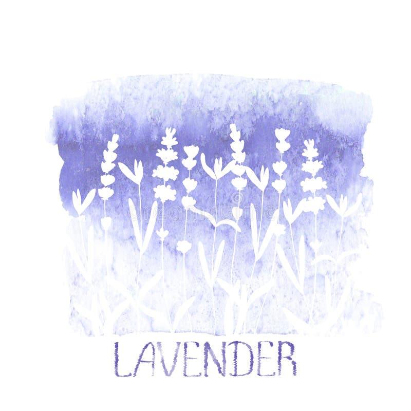 Het patroon van het lavendelgebied op purpere die vlek op witte achtergrond wordt geïsoleerd Watercolourhand getrokken bloemen vector illustratie