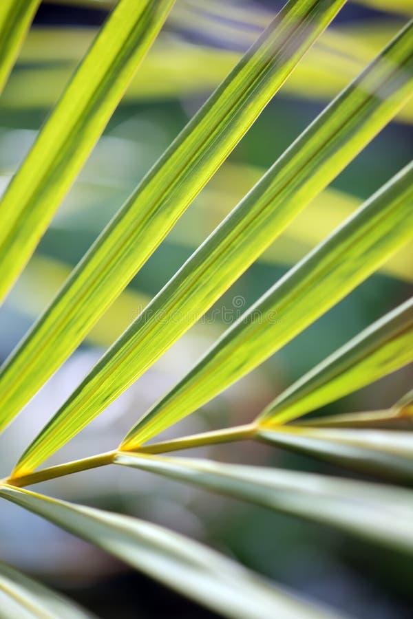 Het patroon van palmbladen royalty-vrije stock afbeelding
