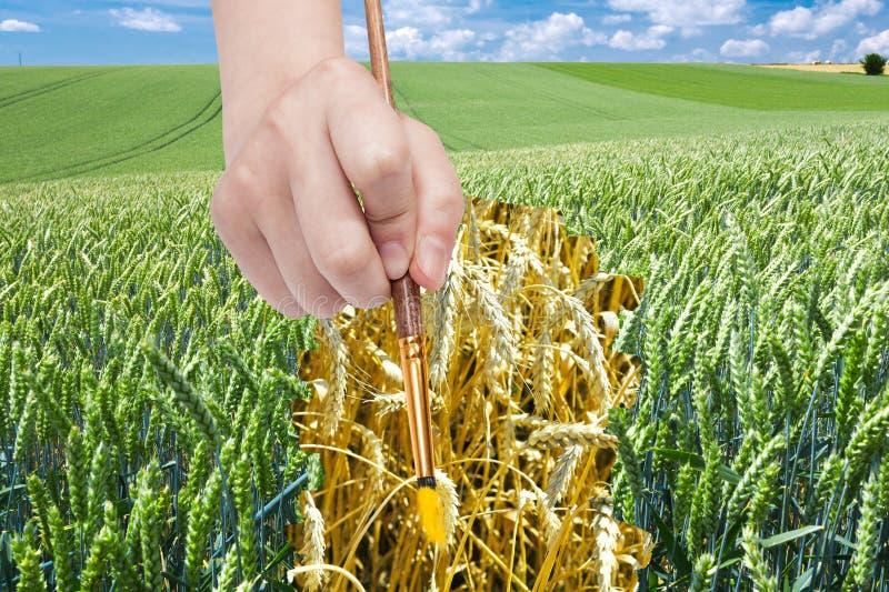 Het penseel trekt rijpe oren van tarwe op groen gebied royalty-vrije stock afbeeldingen