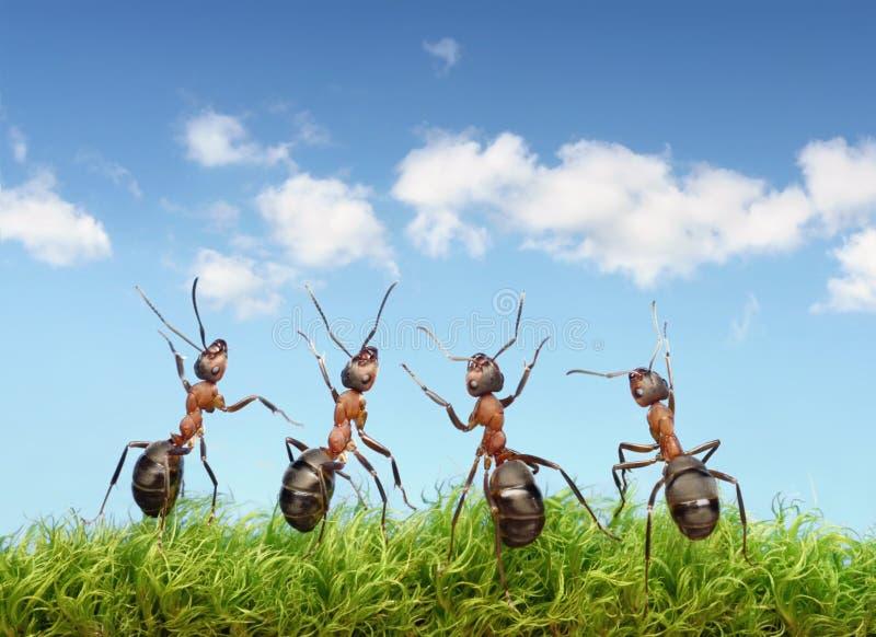 Het perfecte concept van het het werkteam, mieren onder blauwe hemel stock afbeeldingen