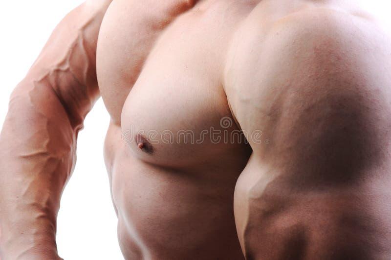 Het perfecte mannelijke lichaam stock foto