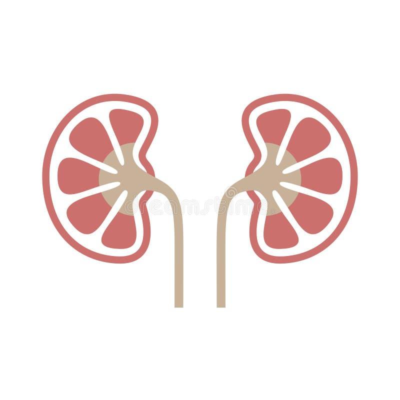 Het pictogram van de nierenkleur vector illustratie