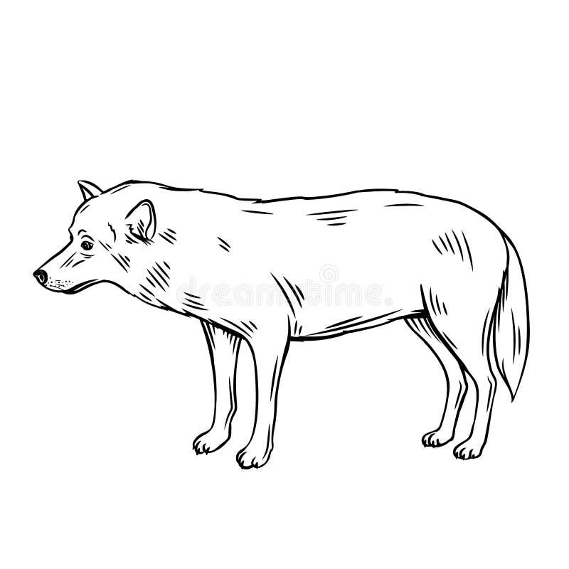 Het pictogram van de overzichtswolf stock illustratie