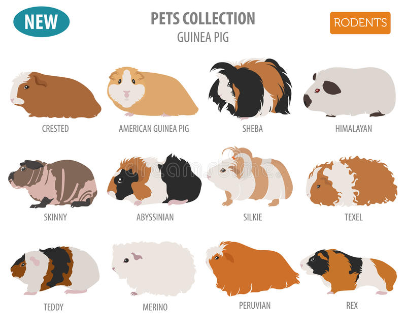 Het pictogram vastgestelde vlakke die stijl van proefkonijnrassen op wit wordt geïsoleerd Huisdierenstaaf vector illustratie