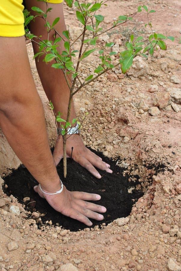 Het planten en niet met onze handen aan het wereldmilieu royalty-vrije stock foto's