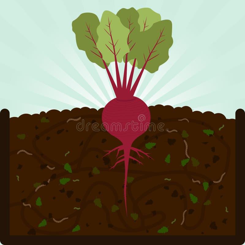 Het planten van biet en compost vector illustratie
