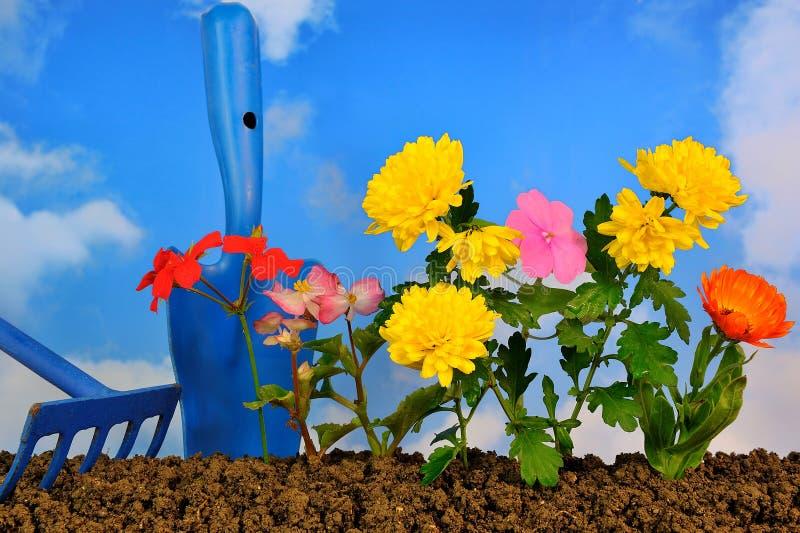 Het planten van bloemen stock foto's