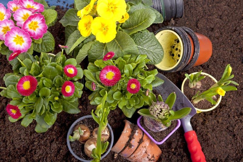 Het planten van bloemen in een bloembed royalty-vrije stock fotografie