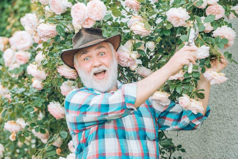 Het planten van bloemen Retro reclame Het portret van grootvader terwijl het werken in bloemen tuiniert Ik houd van onze ogenblik royalty-vrije stock afbeeldingen