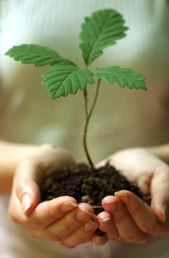 Het planten van bomen royalty-vrije stock foto's