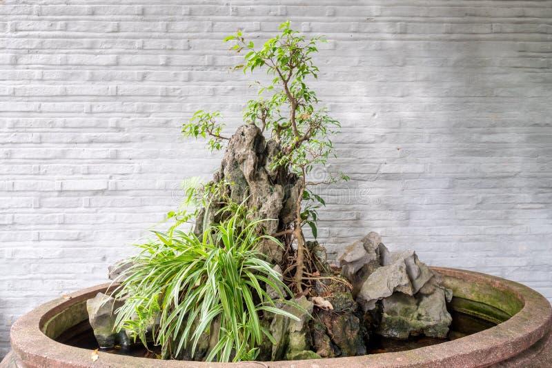 Het planten van Bonsai met rots in vaas stock foto's