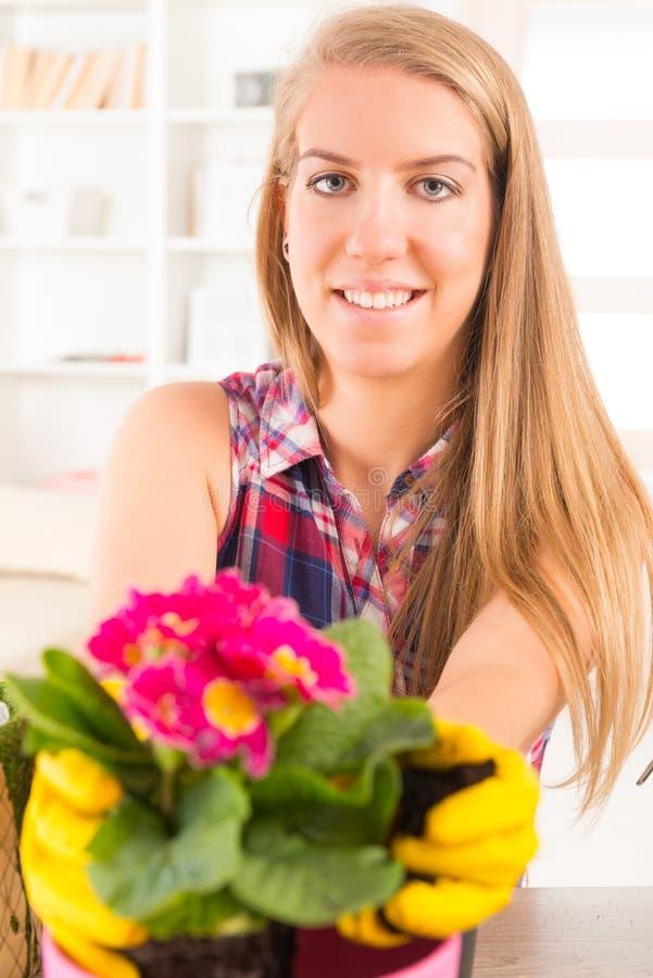 Het planten van colorfull bloem in een bloempot royalty-vrije stock foto