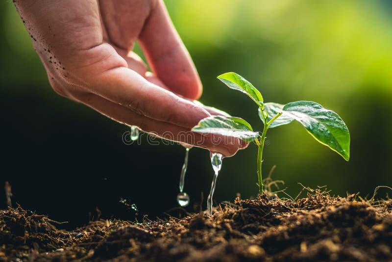 Het planten van de passievrucht en de hand het Water geven van de bomengroei op aardlicht en achtergrond royalty-vrije stock afbeeldingen