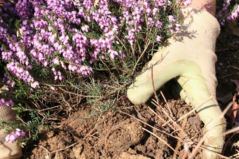 Het planten van een Tuin royalty-vrije stock afbeelding