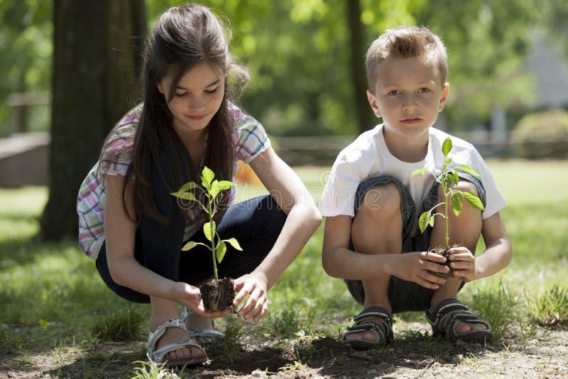 Het planten van kinderen royalty-vrije stock afbeelding