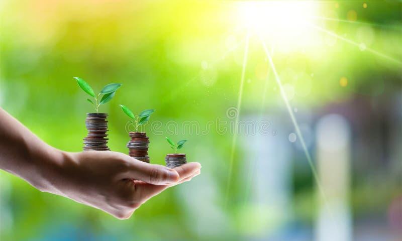 Het planten van muntstukken Bedrijfs de groeiconcepten royalty-vrije stock afbeeldingen
