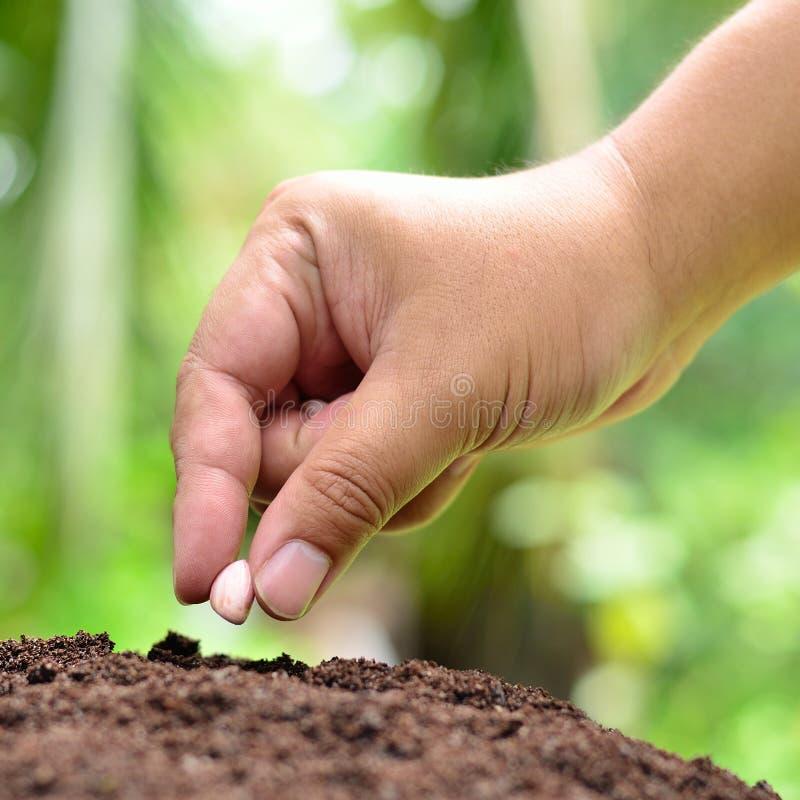 Het planten van pinda stock foto