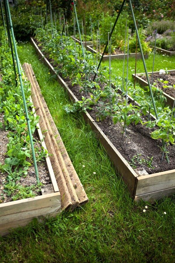 Download Het planten van tomaten stock afbeelding. Afbeelding bestaande uit tomaat - 54077383