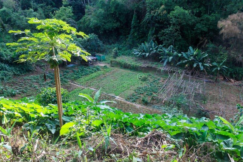 Het planten van tomaten stock foto's