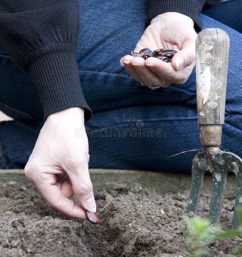 Het planten van zaad stock fotografie