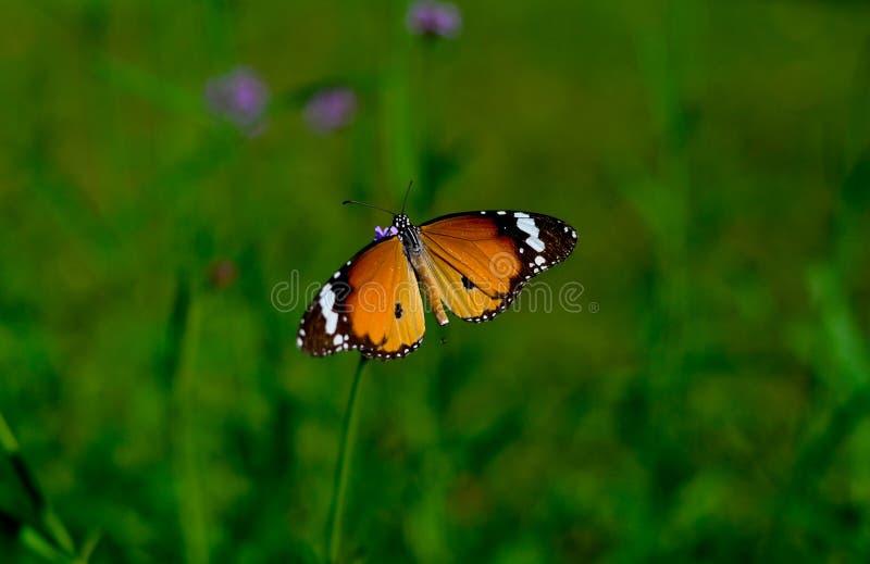 Het plassen Vlinder royalty-vrije stock fotografie