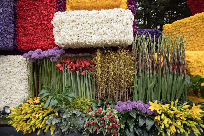 Het platform met tulpen en de hyacinten tijdens de traditionele bloemen paraderen Bloemencorso van Noordwijk aan Haarlem in Nethe royalty-vrije stock fotografie