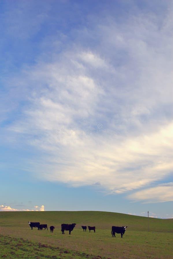 Het platteland van de lente royalty-vrije stock foto